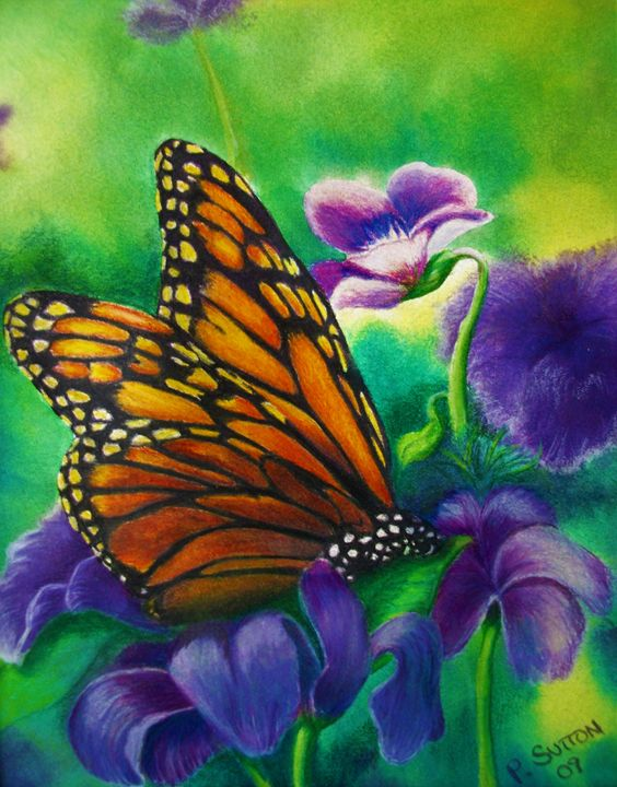 MONARCH BUTTERFLY - PamSutton