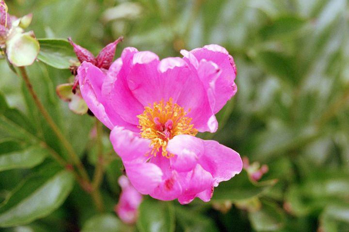 Flower - Tim McLaughlin Jr