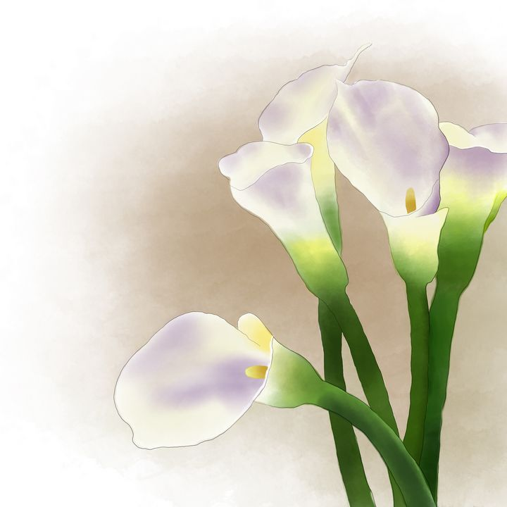 Calla Lily - Annette Wood Graphics