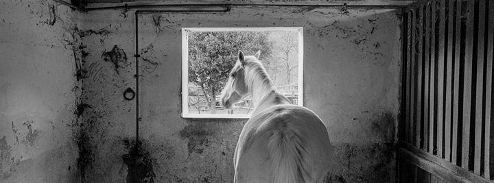 Cavallo - Edo Rebecchi