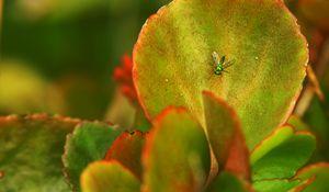 Green Light Nature