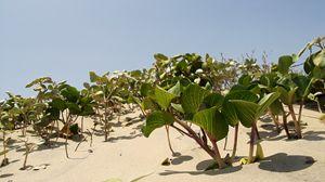 Wild Beach Plants