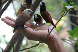 Little Birdies - Vivid colours