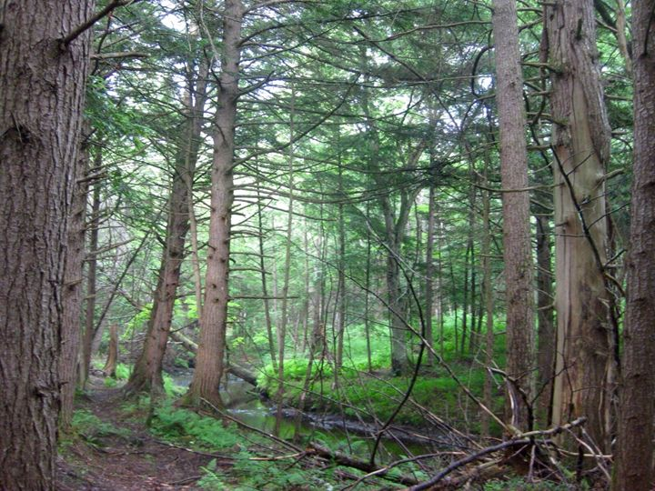 New York Woods - Tristaya Scene