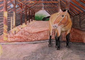 Przewalski Horse in Chernobyl