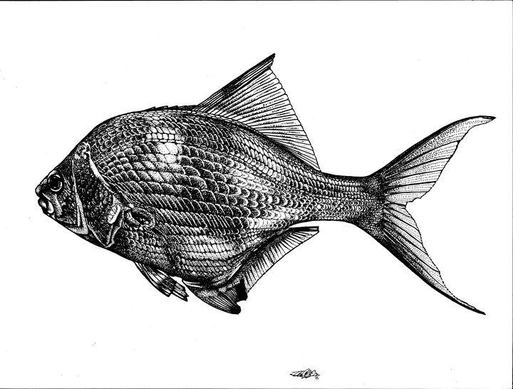 The Fish - David E Feaman