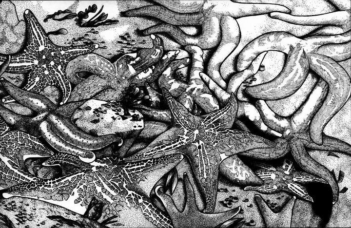 Starfishes - David E Feaman