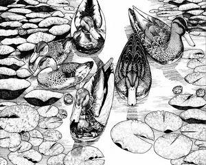 Ducks - David E Feaman