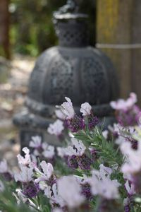 Ethereal Garden - lavender and lamp