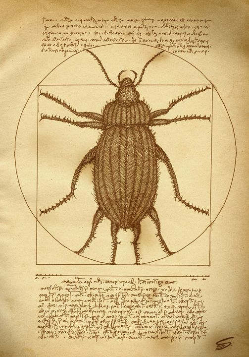 Vitruvian Beetle - Sherise Seven Art
