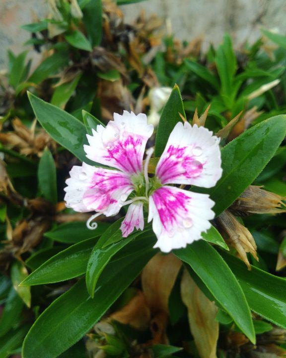 Beautiful flower - Mohit Kashyap