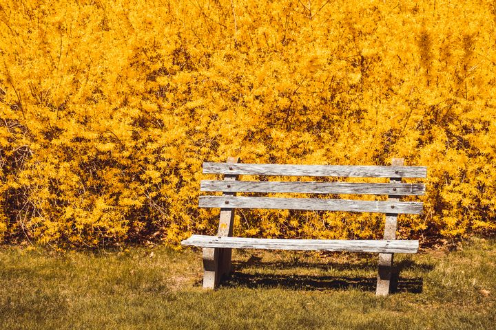Yellow Flowers - Griffin Moran Photography