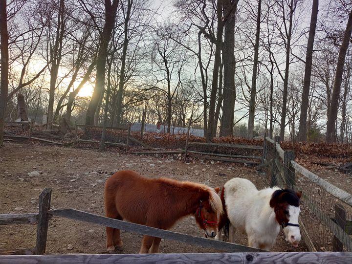 Ponies - Joy's Collection