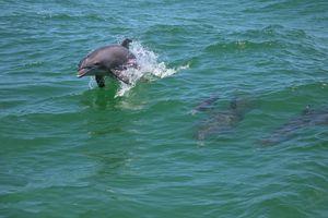 Dolphin Family - HeartNotes