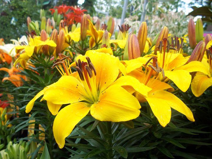 Yellow flower power - DM Photography