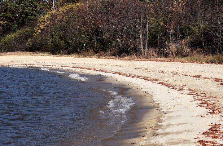 Shore at Jamestown Beach - Angela Ronk 24k FX Design