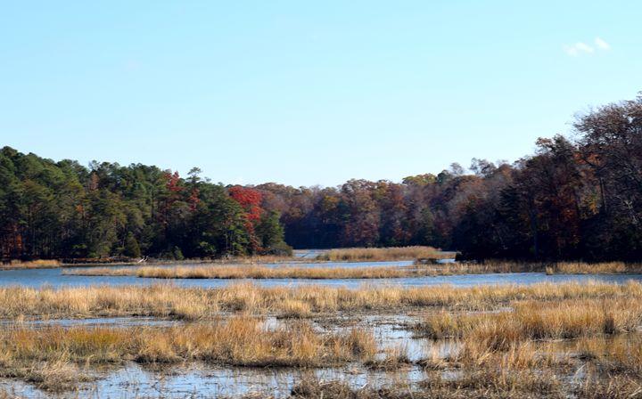 Marsh in Jamestown - Angela Ronk 24k FX Design