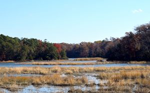 Marsh in Jamestown