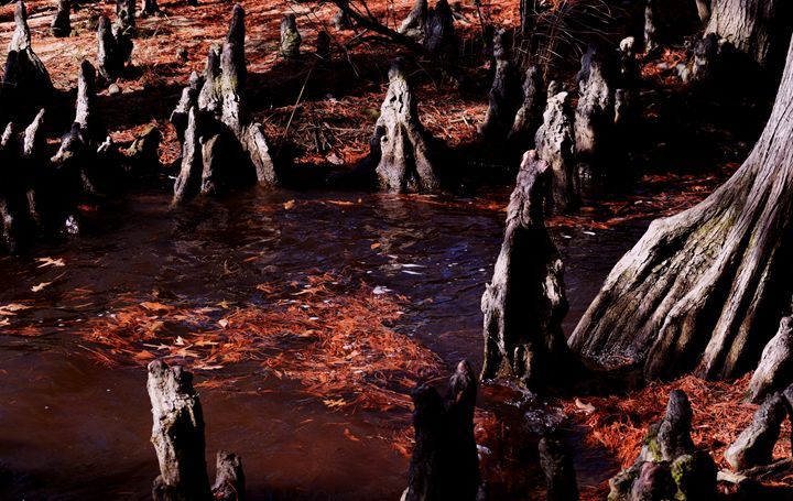 Eerie Stumps at the Grotto - Angela Ronk 24k FX Design