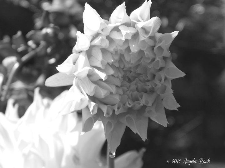 Morning Dew on an Unopened Bloom - Angela Ronk 24k FX Design