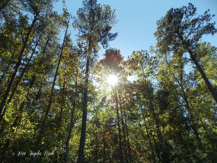 Sun Beaming Treeline - Angela Ronk 24k FX Design