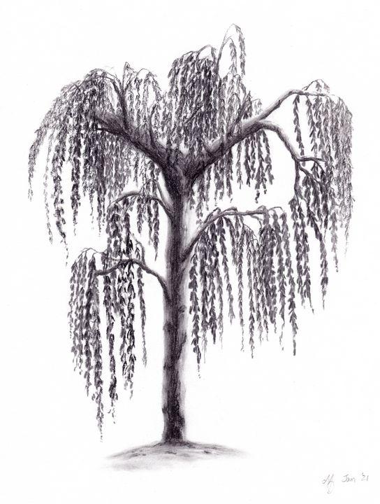 Weeping white birch - NadArtau