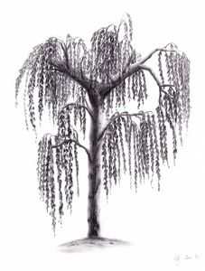 Weeping white birch - NadArtau