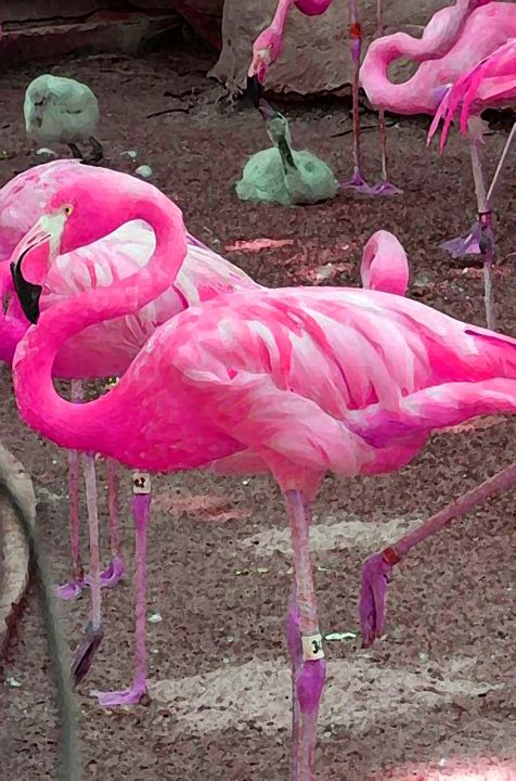 Pink Flamingo - Your Heart Services  Dynisha Cole (c) 2014