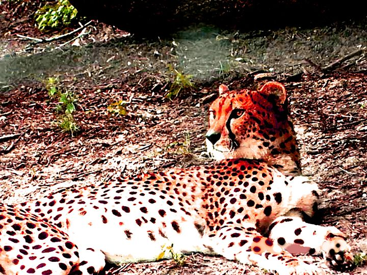 Red Cheetah - Your Heart Services  Dynisha Cole (c) 2014