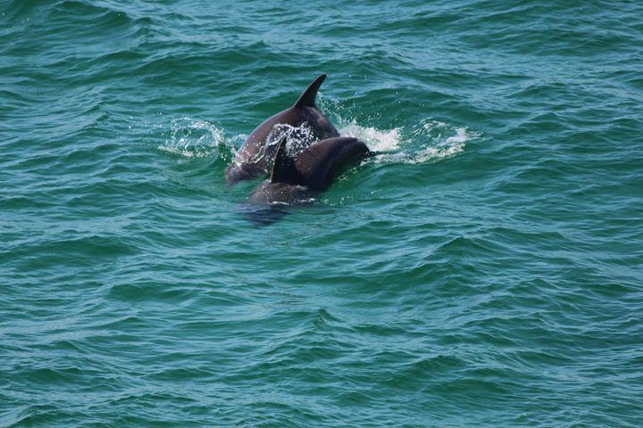 Dolphin Swimming - Jodi Vetter