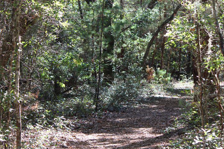Nature Trails - Jodi Vetter