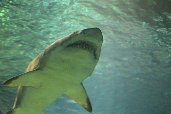 Jaws - Jodi Vetter