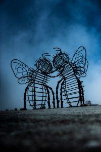 Bees - imadrugdealer