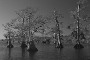 Morning on Blue Cypress Lake