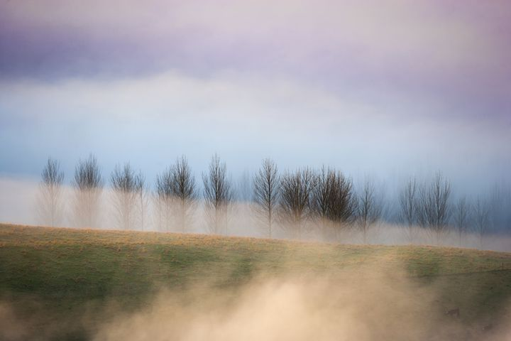 Trees in morning fog - Dave Thomas