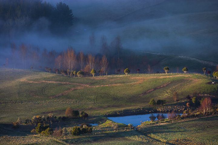 Foggy sunrise on the farm. - Dave Thomas