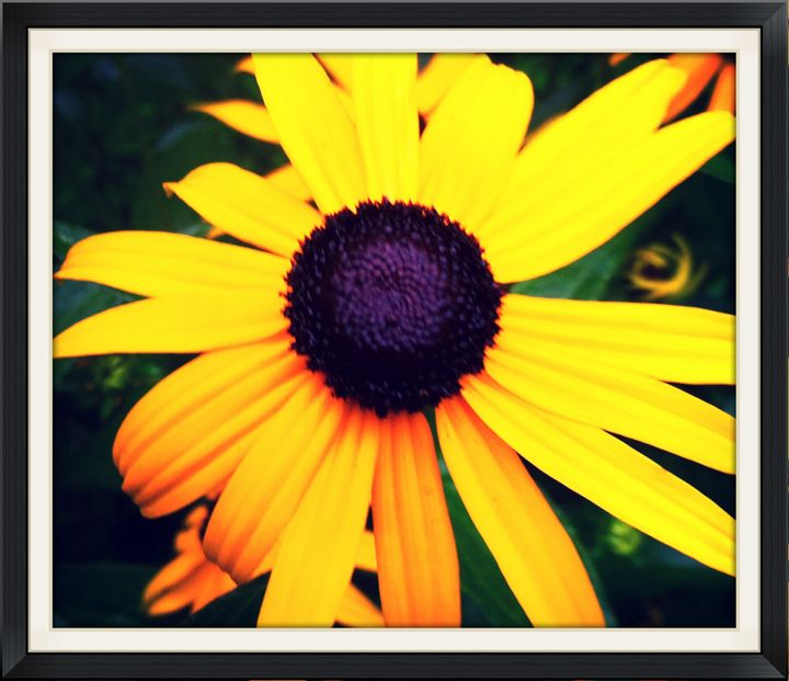september sunflowers - Norma-Jeans Gallery