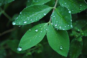 summers rain