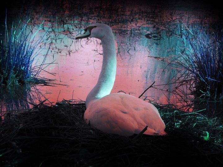 Pink swan - Alternative Art