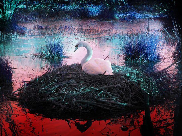 Swan nesting - Alternative Art