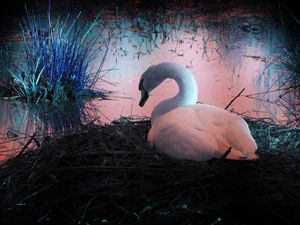 Swan pond - Alternative Art