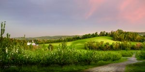 Early Morning Apple Orchard