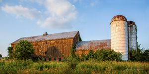 Overgrown Country Dairy Barn