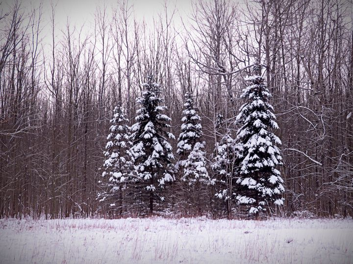 Winter White Magic - Leslie Montgomery