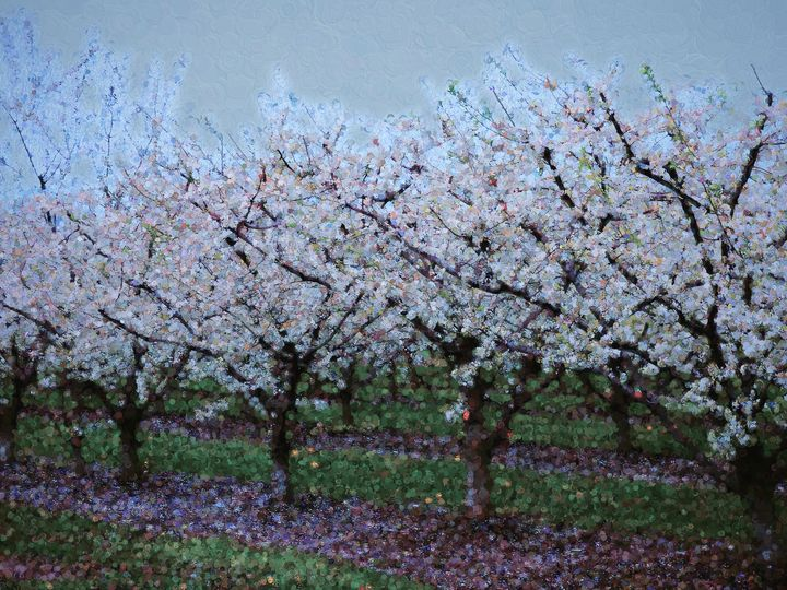 Springtime In The Cherry Orchard - Leslie Montgomery