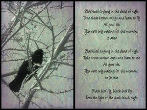 Beatles Blackbird - Leslie Montgomery