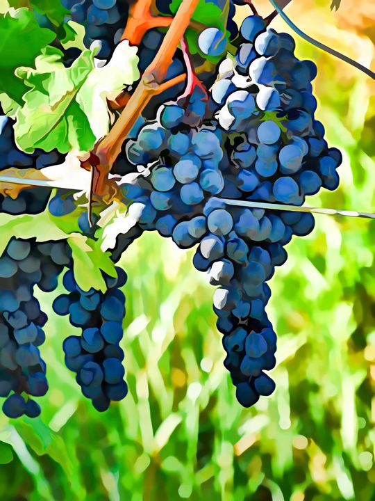 On The Vine - Painting - Leslie Montgomery