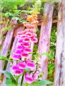 Foxglove In Abstract - Leslie Montgomery