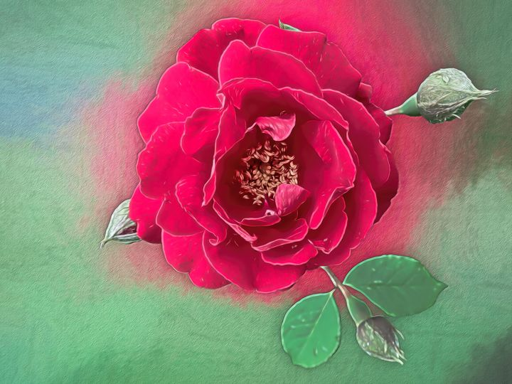 Luscious Red Rose - Leslie Montgomery