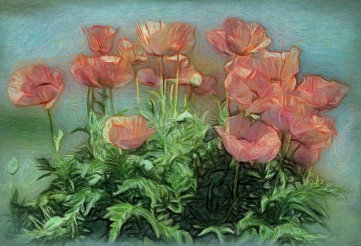 Peachy Poppies In The Garden - Leslie Montgomery